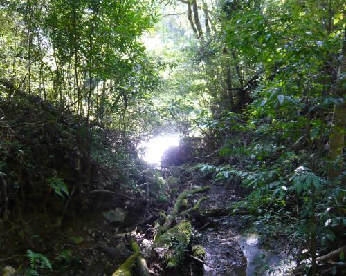 木のトンネル_convert_20131024213535