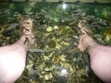 小魚_convert_20100519140034