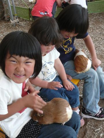 ふれあい動物園_convert_20100614112424