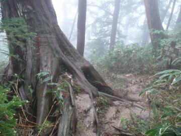 幻想の森_convert_20100622113231