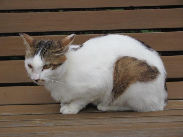 ネコだらけな山形城2