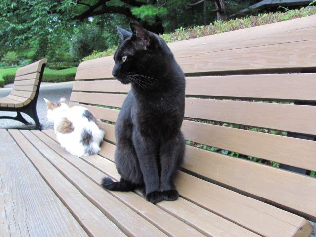 ネコだらけな山形城3