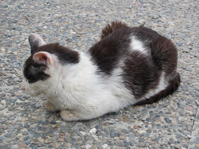 ネコだらけな山形城4