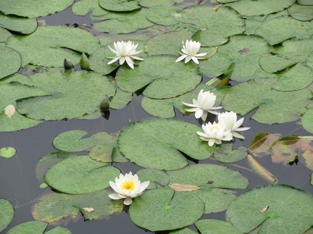 二本松城庭園池2