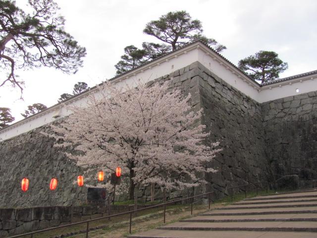 二本松城桜平成25年4月15日e