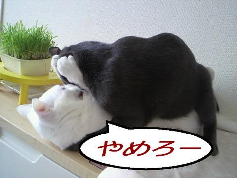 はげしぃね2