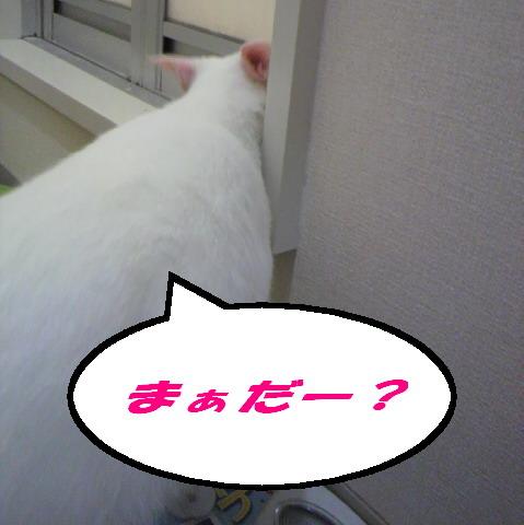 まちみかん1