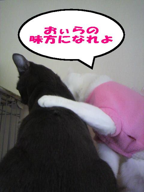 おぃらの味方5