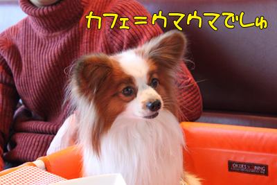 kashiwa_100110_023