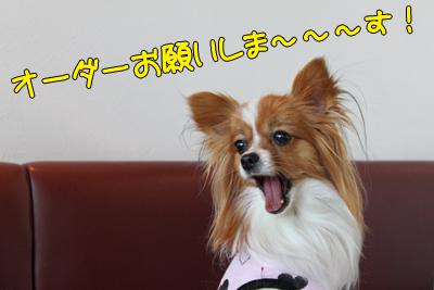 kashiwa_100110_024