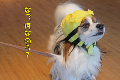 kashiwa_100110_038