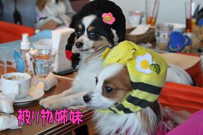 kashiwa_100110_045