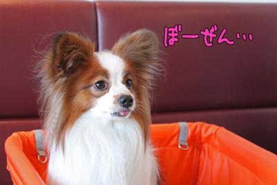 kashiwa_100110_048