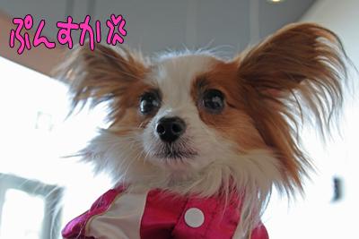 kashiwa_100110_049