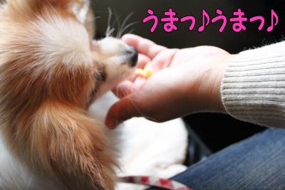 yoyogipark_032