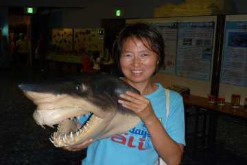 サメの剥製