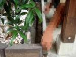 花壇の枠を補修