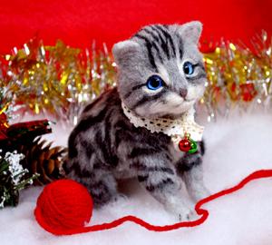 アメショ猫131126 025