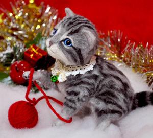 アメショ猫ー131126 010