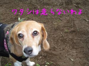IMG_0137-いちご
