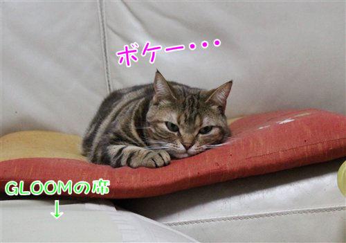 IMG_0338-R1.jpg