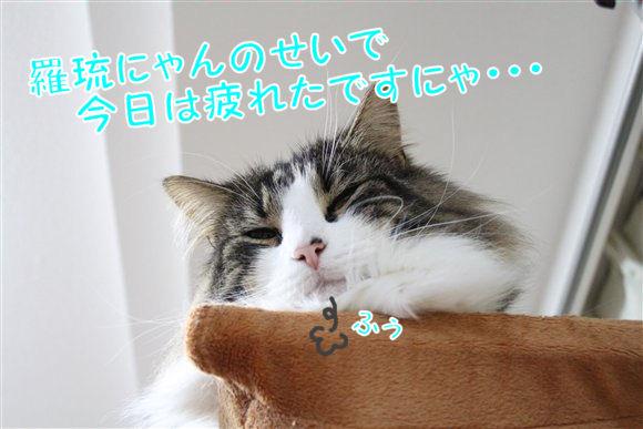 IMG_0440-R1.jpg