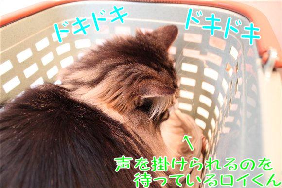 IMG_0534-R1.jpg
