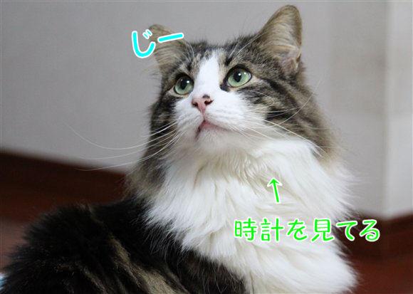 IMG_0568-R1.jpg