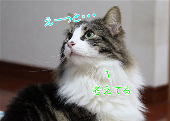 IMG_0569-R1.jpg
