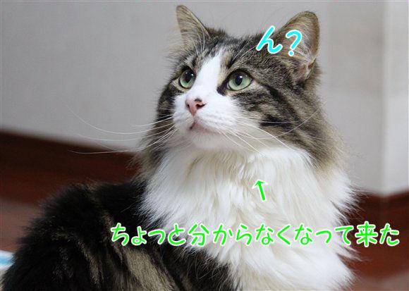 IMG_0571-R1.jpg