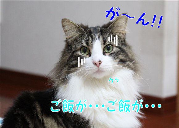 IMG_0575-R1.jpg
