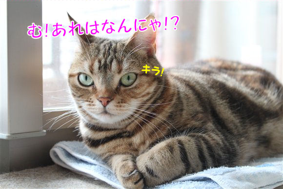 IMG_0887-R1.jpg
