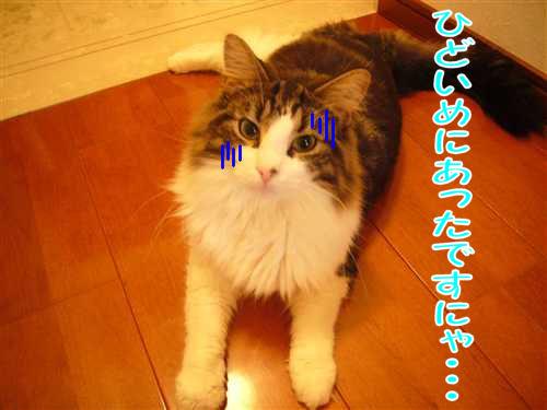 P1070873_R.jpg