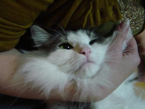 白いおひげ(2009.11.23)
