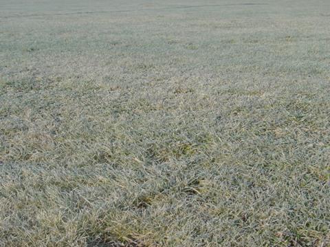 霜がびっしり(2009.12.11)
