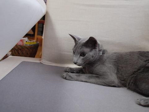 ソファだよ(2009.12.12)