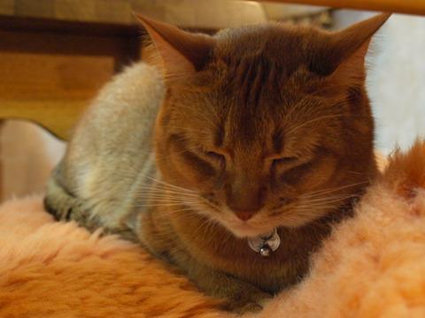 疲れたなのよっ(2009.12.12)