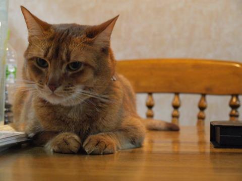 テーブルの上...(2009.12.14)
