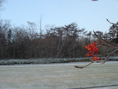 小雪の職場地方(2009.12.15)