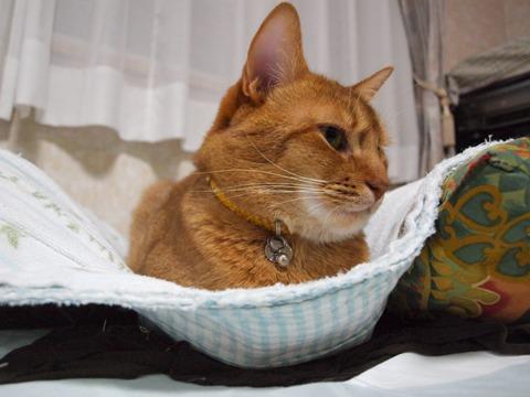 毛布の上のジョゼフィン(2009.12.18)