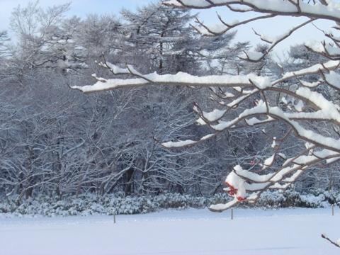 雪です(2009.12.21)
