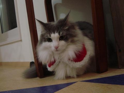 フレサンタ(2009.12.24)