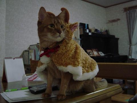 ジョゼフィン・トナカイ♪(2009.12.24)