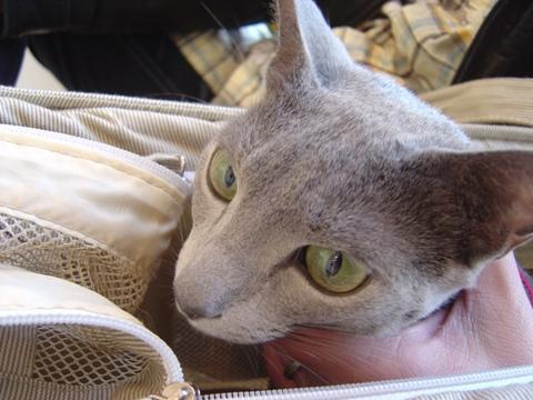 こわかったにゃ(2009.12.29)