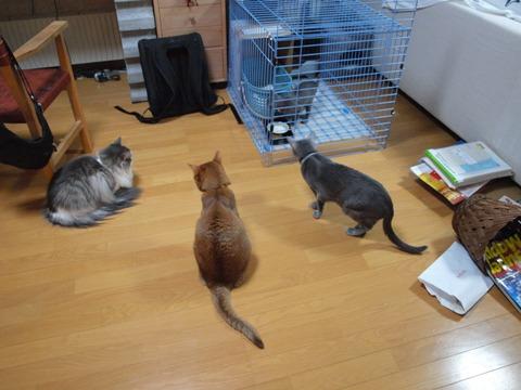 おとうとだ!(2009.12.31)