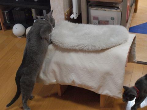 銀色どうし01(2010.01.02)