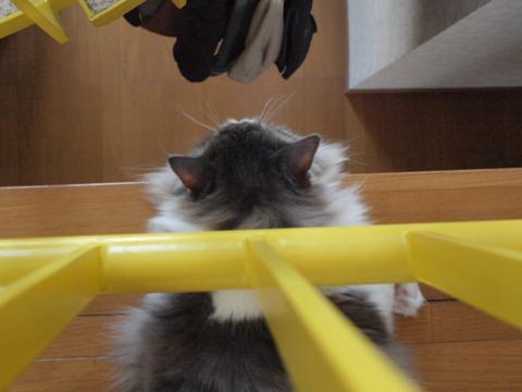 はみ出しフレイヤ04(2010.01.03)
