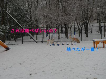 P1000890_3R.jpg