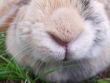 もかちゃんの鼻