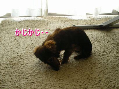 かじかじ②
